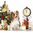 Yorkshire terrier and Christmas Gift - Lizenzfreies Foto