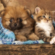Cat and dog — Stockfoto #15052005