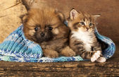 Gato e cachorro — Foto Stock