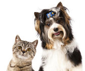 Cat and dog — Stockfoto
