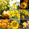 Different beautiful flowers yellow — Stock Photo
