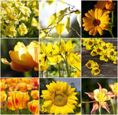 Different beautiful flowers yellow — 图库照片