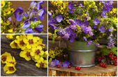 Flowers in a bucket — Stock Photo