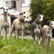 Stock Photo: Group dog