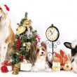 Dog and cat and kitens wearing a santa hat — Stock Photo #30765589