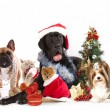 Dog and cat and kitens wearing a santa hat — ストック写真
