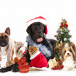Dog and cat and kitens wearing a santa hat — Стоковая фотография