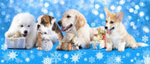 Group dog — Stock Photo