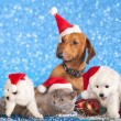 Dog and cat and kitens wearing a santa hat — Stock Photo #33460299