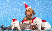Dog and cat and kitens wearing a santa hat — Stock Photo