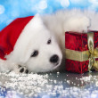 Stock Photo: White puppy with gift in paws