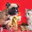 Kitten and puppy, holiday decorations — Stock Photo