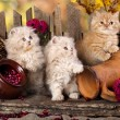 Fluffy kitten  on a background of leaves and boards — Stock Photo