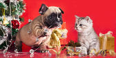 Kitten and puppy, holiday decorations — Foto de Stock