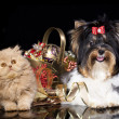 Stock Photo: Kitten and puppy with Christmas decorations