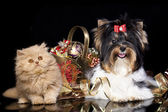 Kitten and puppy with Christmas decorations — Stock Photo