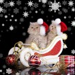 Stock Photo: Little kittens wearing red christmas Santhat