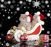 Little kittens wearing red christmas Santa hat — Stock Photo