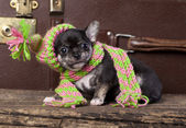 Puppy wearing a knit hat — Stock Photo