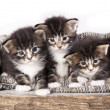 Kittens — Stock Photo #40523385