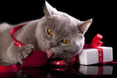 Cat holding a gift in paws — Stock Photo