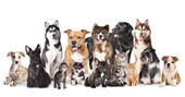 Group of dogs and cats sitting in front of a white backgrou — Stock Photo