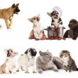 Smoked sausages and dogs , Group of cats and dogs — Stock Photo