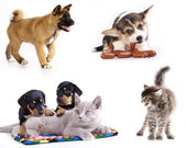 Group of dogs and kitten — Stock Photo