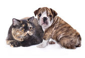 Dogs group — Stock Photo