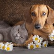 Cat and dog — Stock Photo #49579257