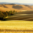 Tuscany landscape with typical farm house on a hill in Val d'Orc — Foto de Stock