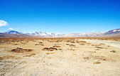 Yellowish mountain road view in tibet — Stock Photo