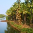 Scenic view of wild tropical jungle - Stok fotoraf