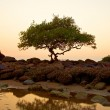 Sunset on the Goa beach, India — Stock Photo #20804133