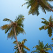 Palm trees at sky — Stock Photo #20805109