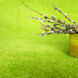 Twigs of willow with catkins in basket on a green background — Stock Photo