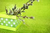 Větvičky vrby se vyskytují v koši na zeleném pozadí — Stock fotografie