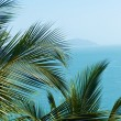 Exotic, beautiful and secluded beach with palm trees in the fore - Foto Stock
