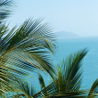 Exotic, beautiful and secluded beach with palm trees in the fore - Stock Photo
