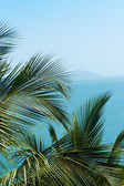 Exotic, beautiful and secluded beach with palm trees in the fore — Stock Photo