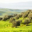 Countryside, San Quirico d'Orcia, Tuscany, Italy — Stock Photo