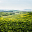 Stock Photo: Early morning on countryside in Tuscany