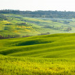 Tuscan landscape — Stock Photo #24766039