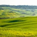 Tuscan landscape — Stock Photo #24766039