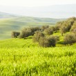 Tuscan landscape — Stock Photo #24766097