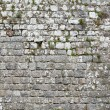 Old stone wall background — Stock Photo #24838735