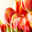 Stock Photo: Beautiful bouquet of red tulips