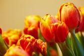 Bando de tulipas laranja no fundo na mesma cor — Foto Stock