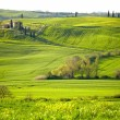 Morning on countryside in Tuscany - Stock Photo