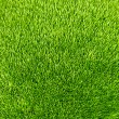 Green grass background texture.  — Zdjęcie stockowe
